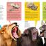Thumbnail image of DKfindout! Animals - 2