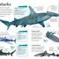 Thumbnail image of DKfindout! Sharks - 2