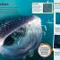 Thumbnail image of DKfindout! Sharks - 4