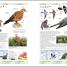 Thumbnail image of RSPB Complete Birds of Britain and Europe - 4