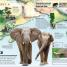 Thumbnail image of What's Where on Earth? Animal Atlas - 2