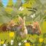 Thumbnail image of Flip Flap Find Into The Woods - 2