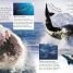 Thumbnail image of Eye Wonder: Sharks - 3