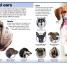 Thumbnail image of Pocket Genius: Dogs - 1