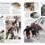 Thumbnail image of DK Eyewitness Books: Hurricane & Tornado - 2