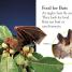 Thumbnail image of DK Readers L1: All About Bats - 3