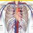 Thumbnail image of El Gran Libro del Cuerpo Humano - 2