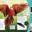 Thumbnail image of DKfindout! Birds - 1