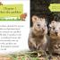 Thumbnail image of DK Reader Level 2: Meet the Quokkas! - 1