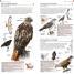 Thumbnail image of Pocket Birds of Canada - 2