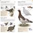 Thumbnail image of Pocket Birds of Canada - 1