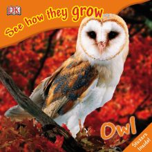 See How They Grow: Owl