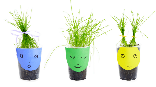 2-Step Science Project for Kids: Grass Haircuts