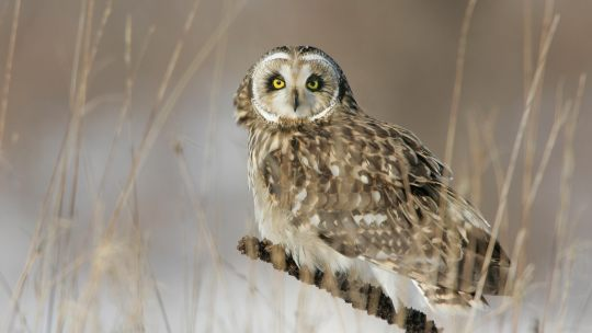 David Bird's Top Places to See Owls in Canada