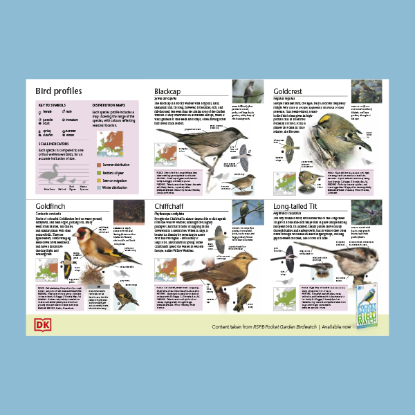 Birds to Watch in Your Garden