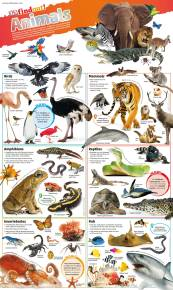 DKfindout! Animals Poster