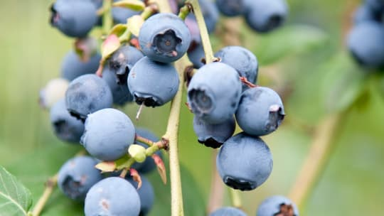 The 10 Best Fruits to Grow in a Small Garden