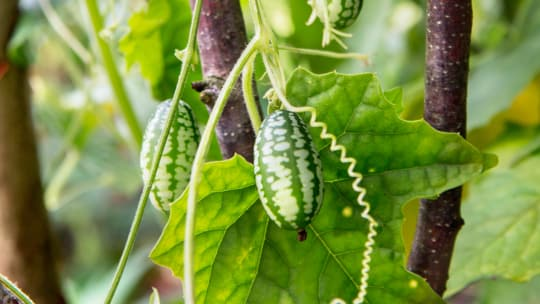 5 Fantastically Unusual Foods to Grow and Eat This Year
