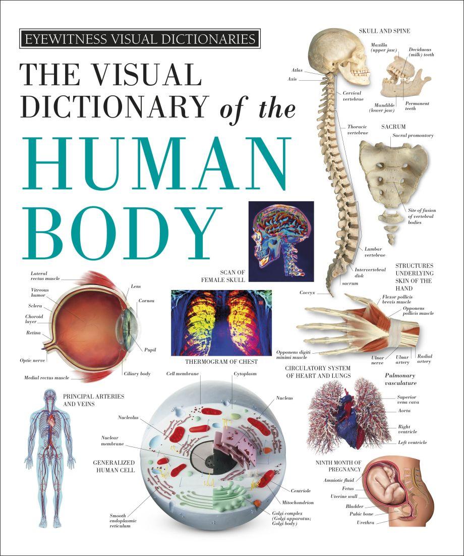 Eyewitness Visual Dictionaries The Visual Dictionary Of The Human