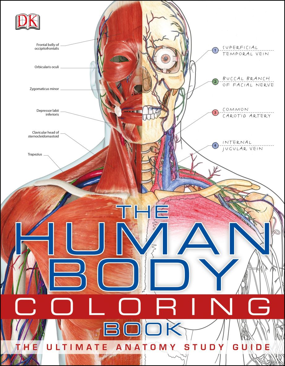 The Human Body Coloring Book Dk Us