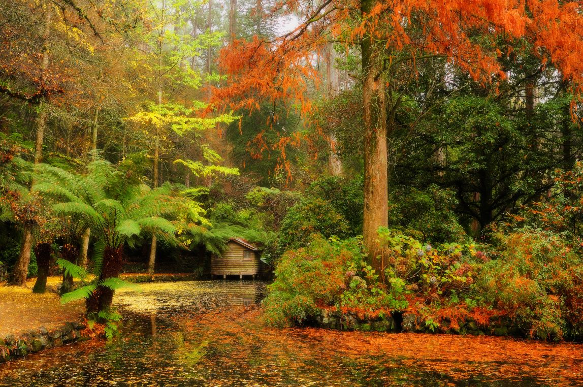 Home Design Ideas autumn view gardens ellisville ellisville mo with