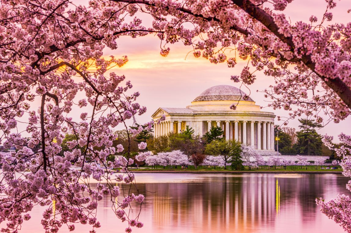 cherryblossombe  Top Dating Sites  Pick Your Cherry!