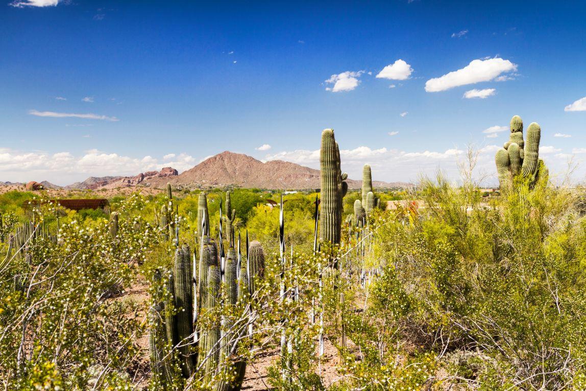 Camelback Mountain From Desert Botanical Gardens, Phoenix, Arizona, USA
