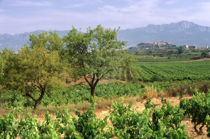 Laguardia vineyards, La Rioja