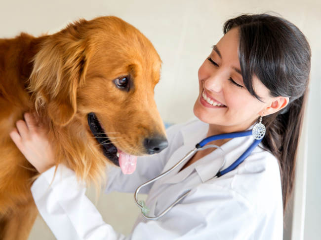 Kutu Anjing: Risiko Penyakit dan Cara Mengobati Gigitannya - Alodokter