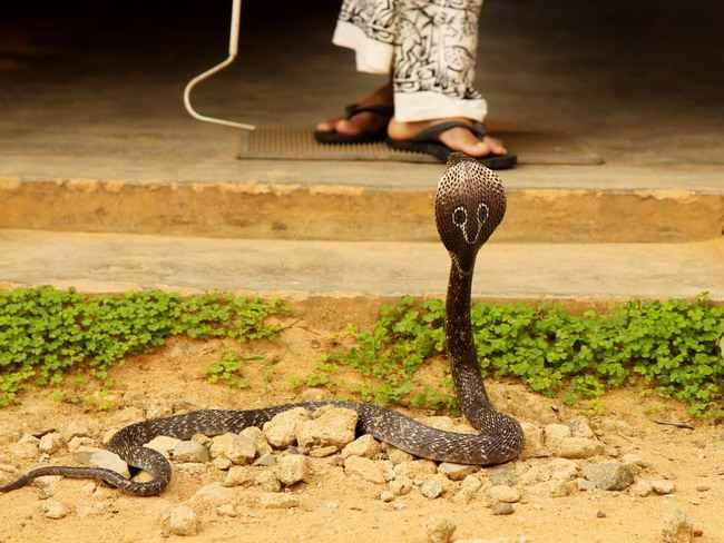digigit ular-alodokter