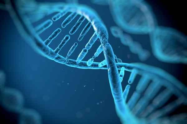 ตรวจ DNA