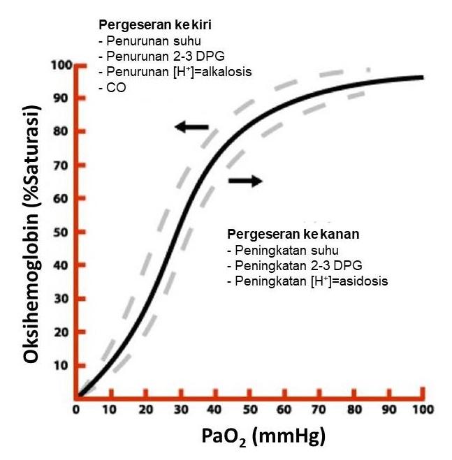 Gambar: Kurva disosiasi oksigen. Sumber: karya pribadi penulis.
