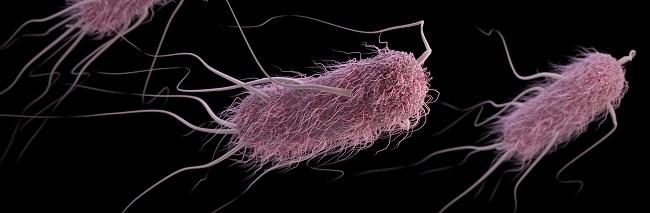 E coli, patogen utama ISK. Sumber: A Eckert, J Oosthuizen, J Archer, PHIL CDC, 2016.