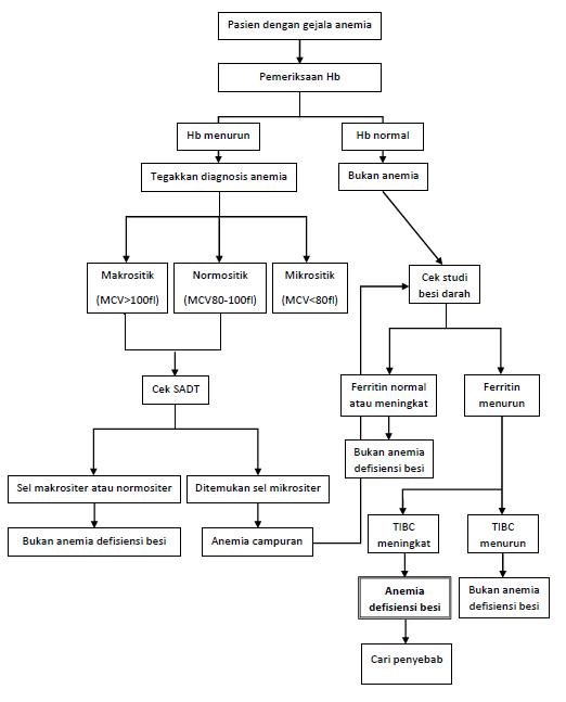 Pendekatan diagnostik anemia defisiensi besi. Sumber: karya pribadi penulis.