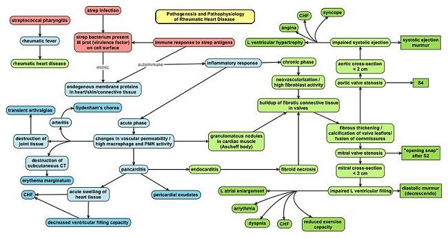 Patofisiologi demam rematik dan penyakit jantung rematik. Sumber: Oxynthes, Wikimedia commons, 2010.