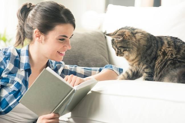 Waspada bahaya bulu kucing - alodokter