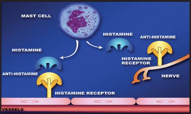 Antihistamine_Phn003_Wikimedia commons_2009_compressed