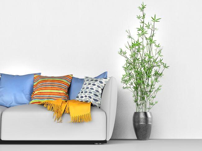 Lebih Rileks dan Fokus Berkat Manfaat Tumbuhan di Dalam Rumah - Alodokter