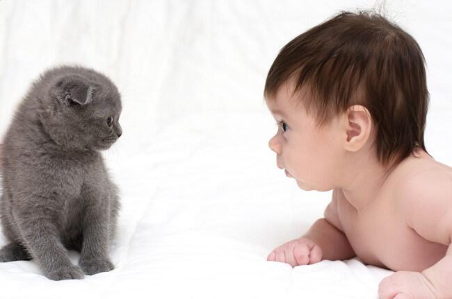 Benarkah Hewan Peliharaan Dapat Membuat Bayi Lebih Sehat? - Alodokter