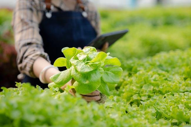 Ini Fakta Tentang Sayur Organik yang Perlu Anda Ketahui - Alodokter