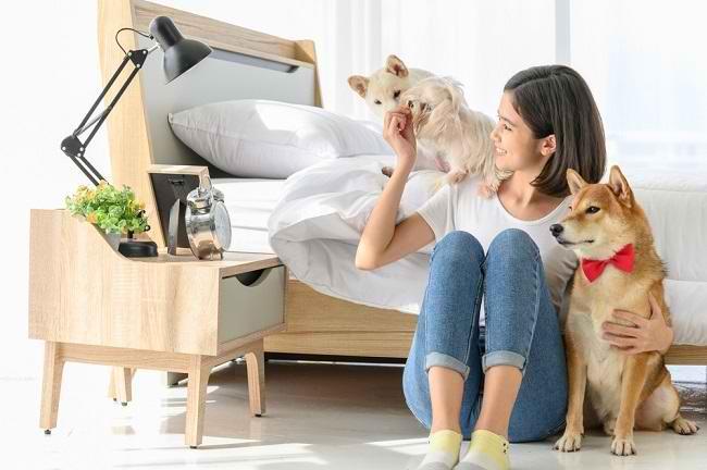 Kutu Anjing Risiko Penyakit Dan Cara Mengobati Gigitannya Alodokter