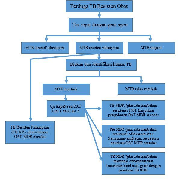 algoritma tb mdr 2