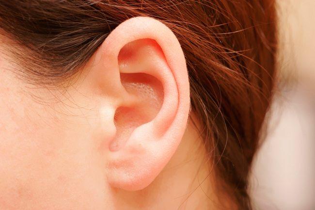 Hasil gambar untuk telinga