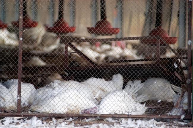 Flu Burung - Alodokter
