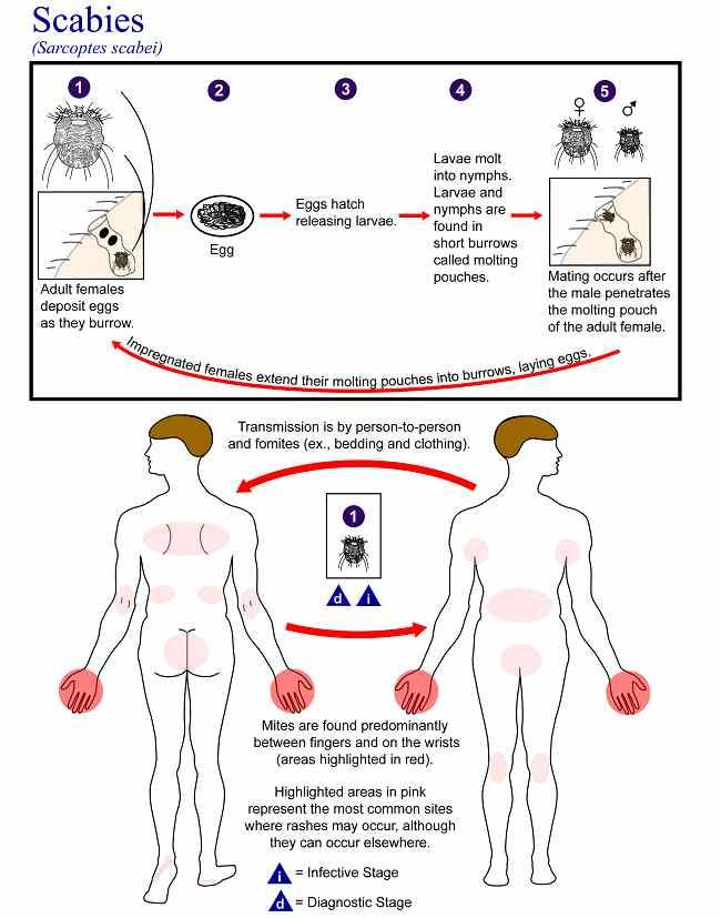 Sumber: AJ da Silva, M Moser, PHIL CDC, 2003.