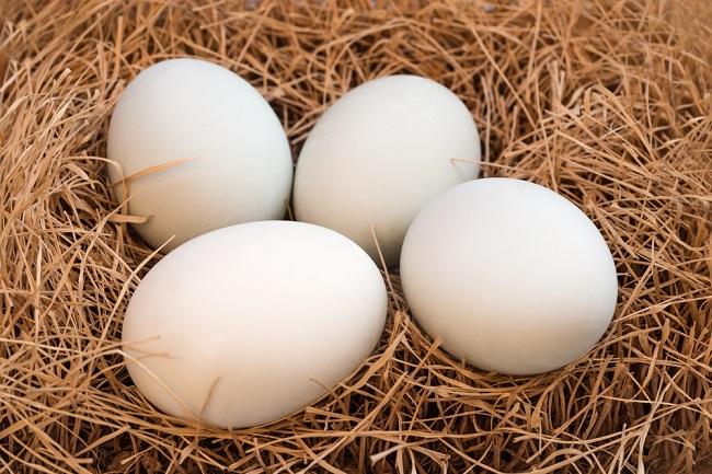 Ketahui Kelebihan dan Kekurangan Telur Bebek