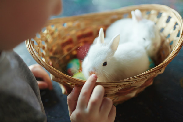ไข้กระต่าย