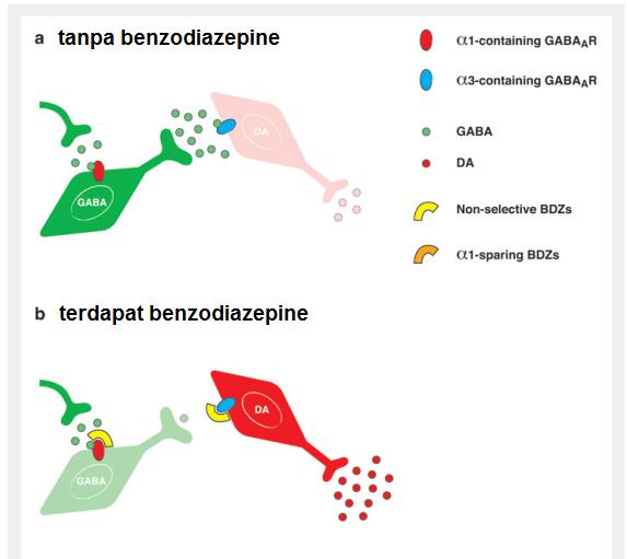 Hubungan antara neuron GABAnergik dan dopaminergik di VTA. Sumber: dr Irwan Supriyanto 2019.
