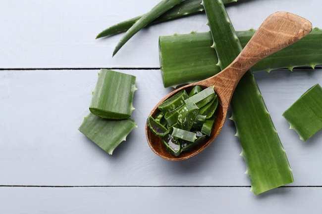 8 Manfaat Aloe Vera Untuk Kesehatan Dan Kecantikan Alodokter