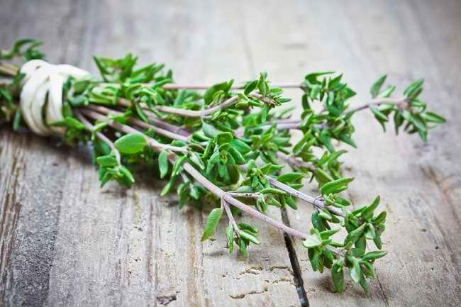 Ragam Manfaat Daun Thyme untuk Kesehatan - Alodokter